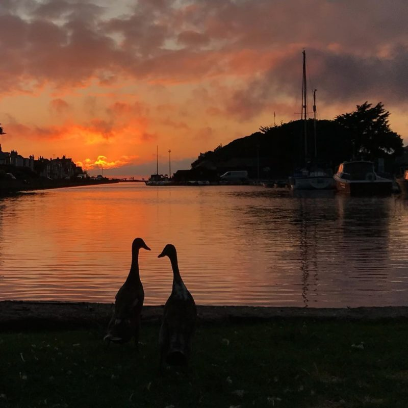 Ducks sunset July 2019 - Copy